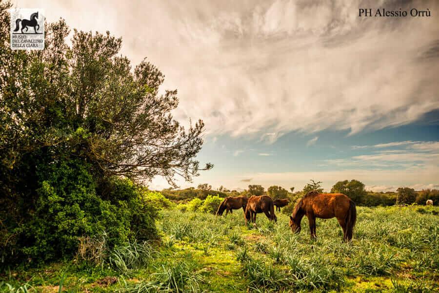 Il parco della Giara fotografato da Alessio Orrù
