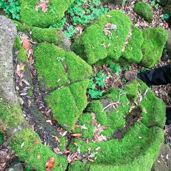 Reperti presso Bruncu Suergiu al Parco della Giara